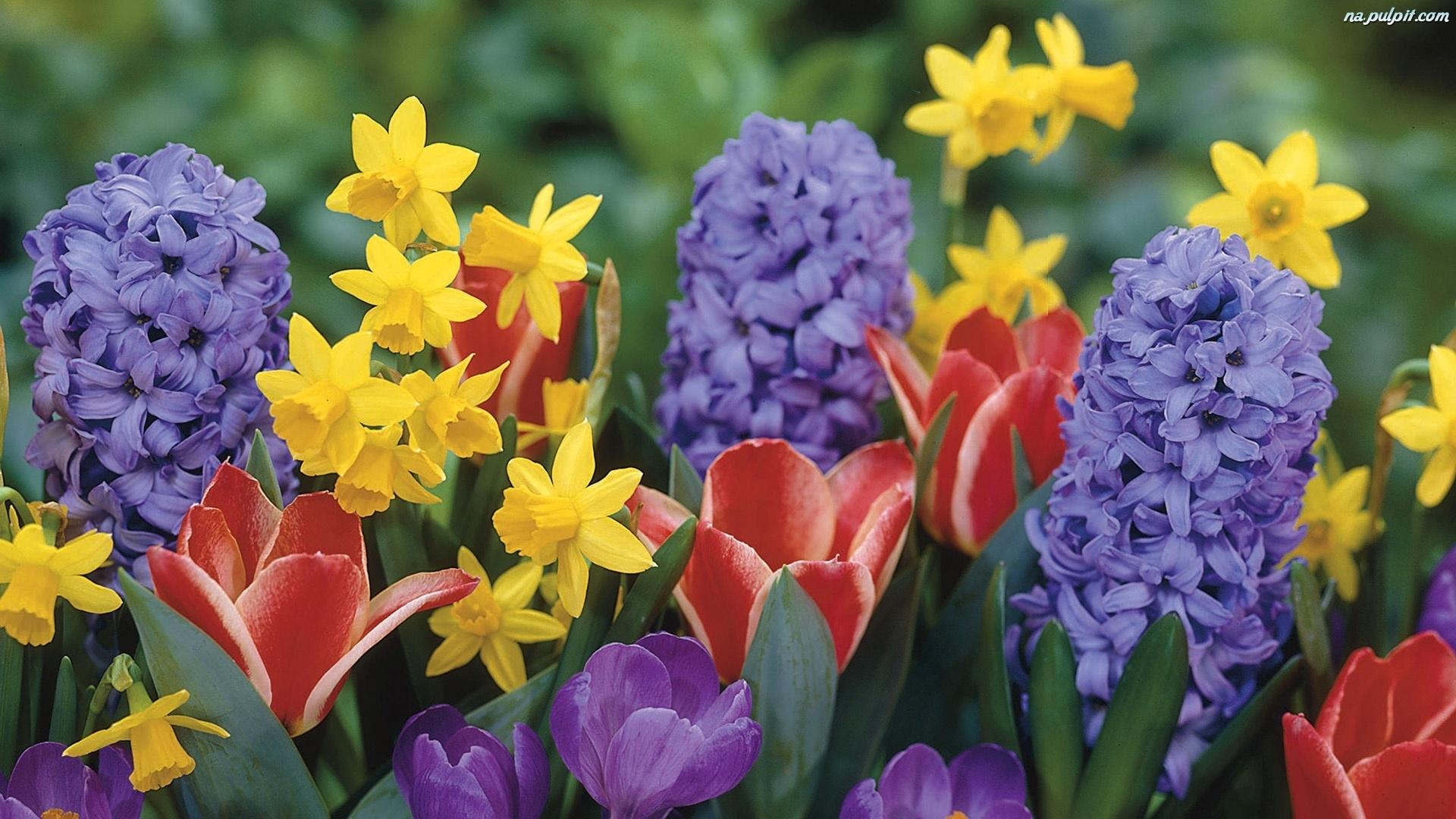 Wiosenne Kwiaty Pulpit Genuardis Portal Picture